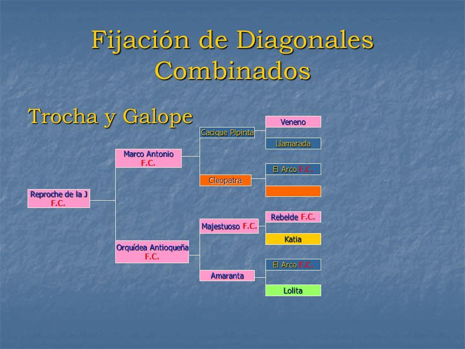 Fijación de Diagonales Combinados