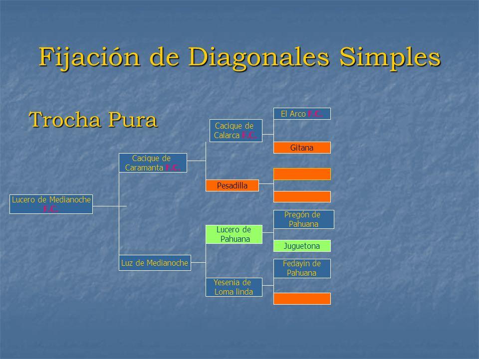 Fijación de Diagonales Simples