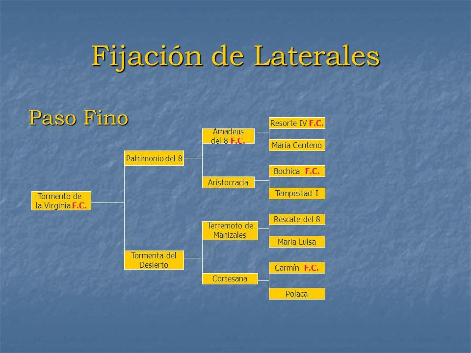 Fijación de Laterales Paso Fino Resorte IV F.C. Amadeus del 8 F.C.