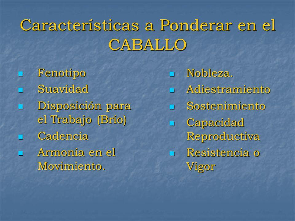 Características a Ponderar en el CABALLO