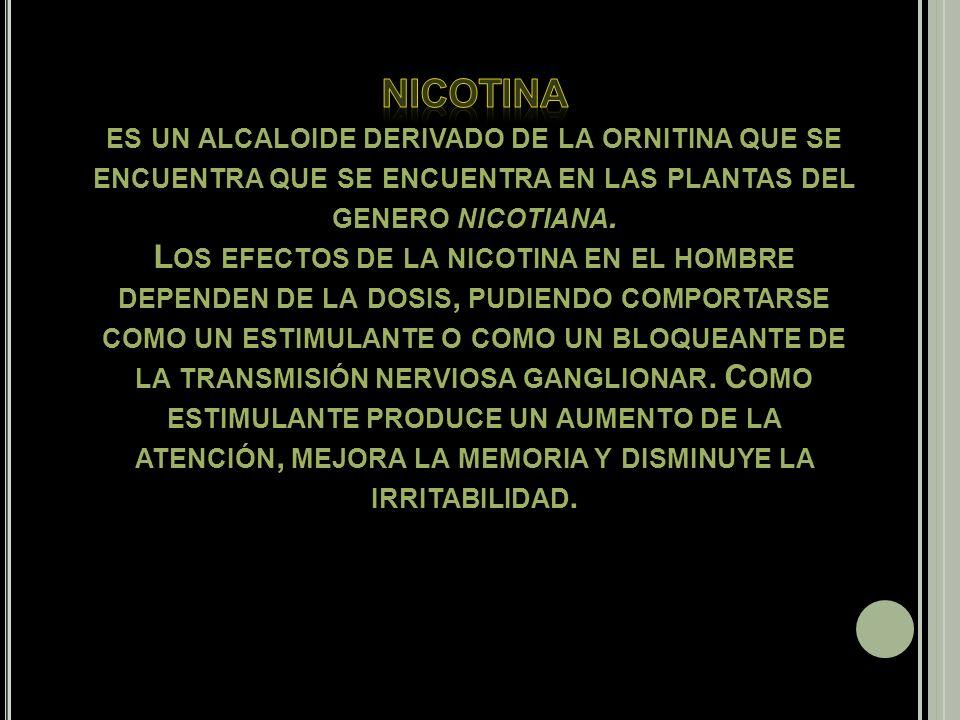 nicotina es un alcaloide derivado de la ornitina que se encuentra que se encuentra en las plantas del genero nicotiana.