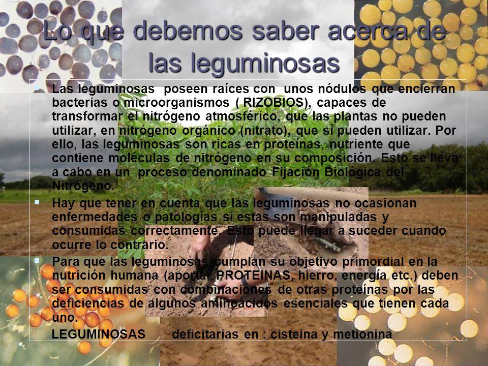 Lo que debemos saber acerca de las leguminosas