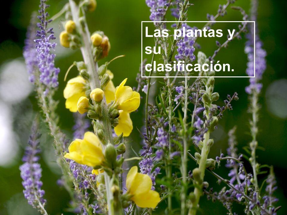Las plantas y su clasificación.