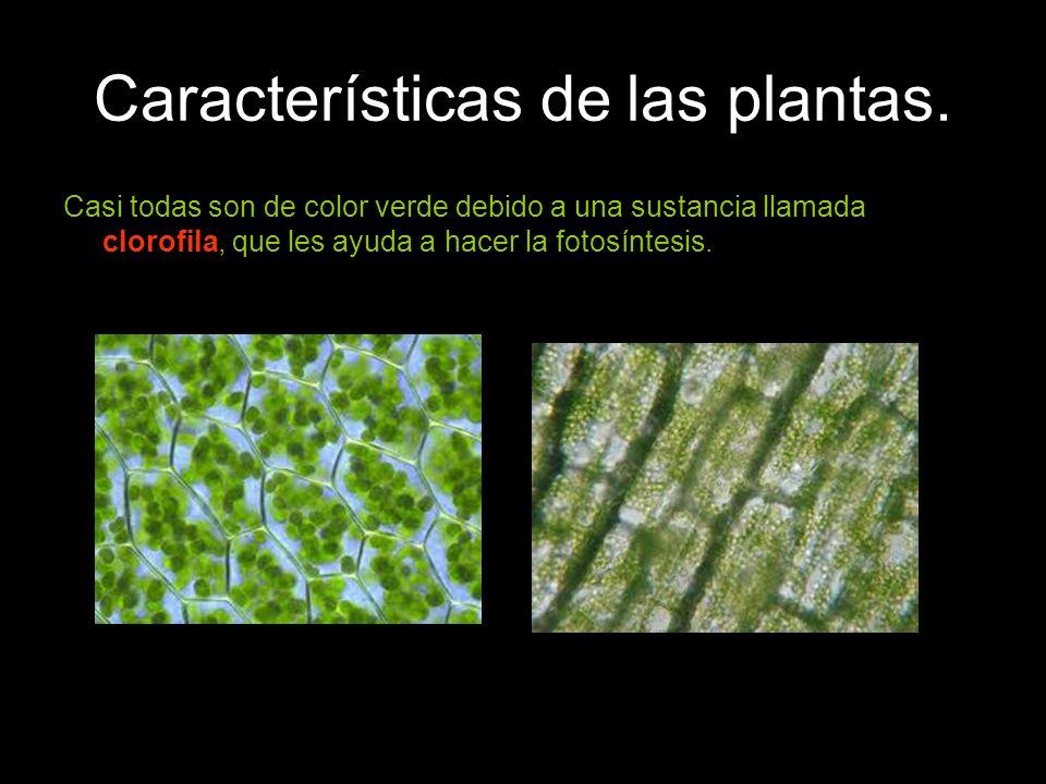 Características de las plantas.