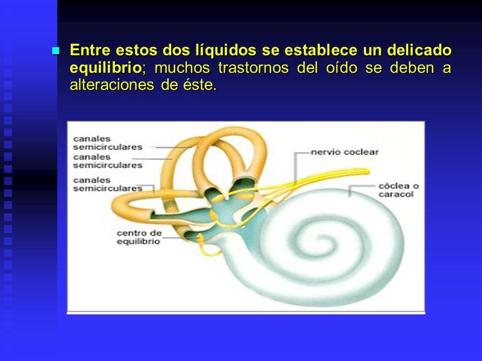 Entre estos dos líquidos se establece un delicado equilibrio; muchos trastornos del oído se deben a alteraciones de éste.