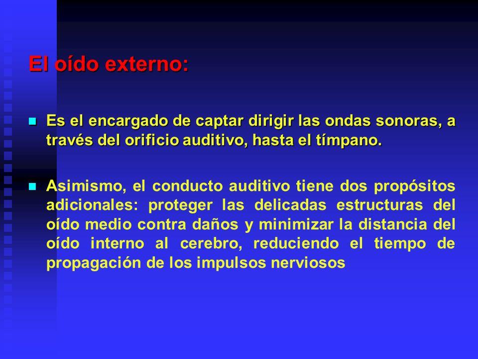 El oído externo: Es el encargado de captar dirigir las ondas sonoras, a través del orificio auditivo, hasta el tímpano.