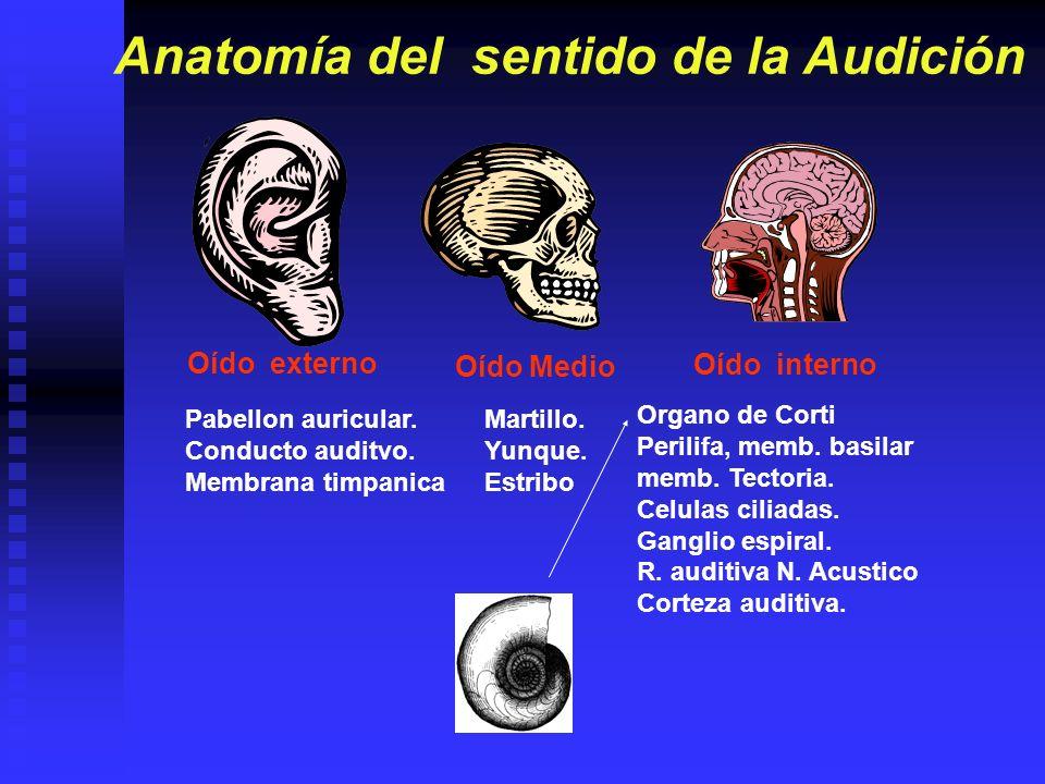 Anatomía del sentido de la Audición
