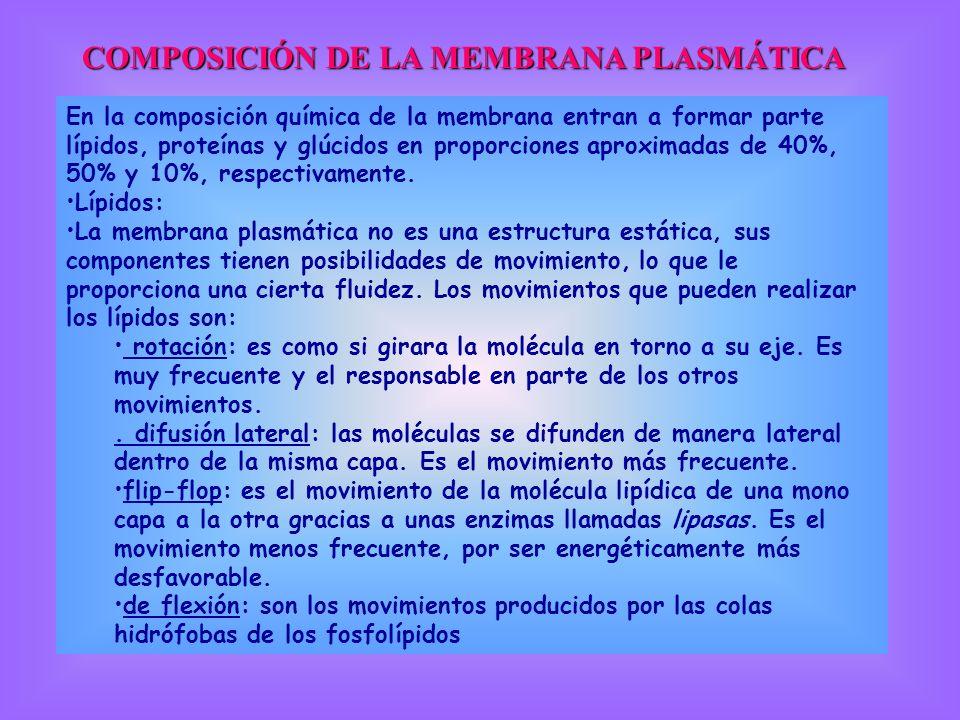 COMPOSICIÓN DE LA MEMBRANA PLASMÁTICA