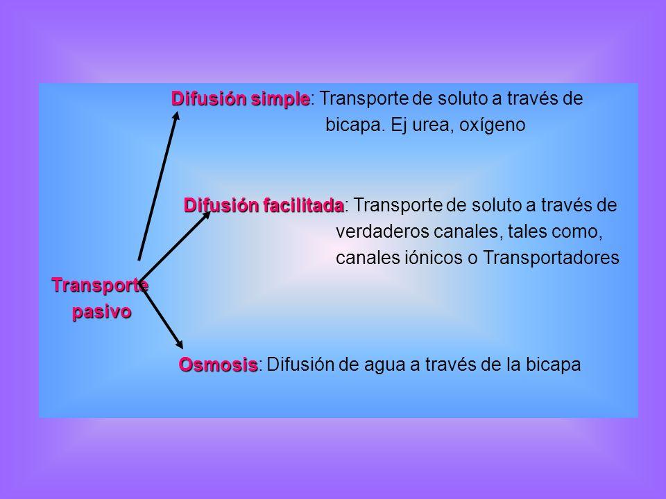 Difusión simple: Transporte de soluto a través de
