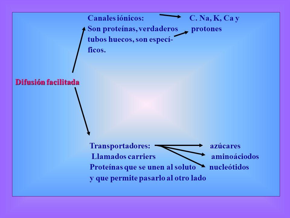 Canales iónicos: C. Na, K, Ca y