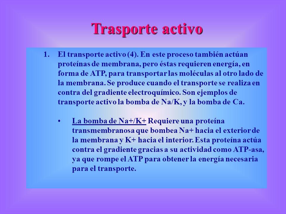 Trasporte activo