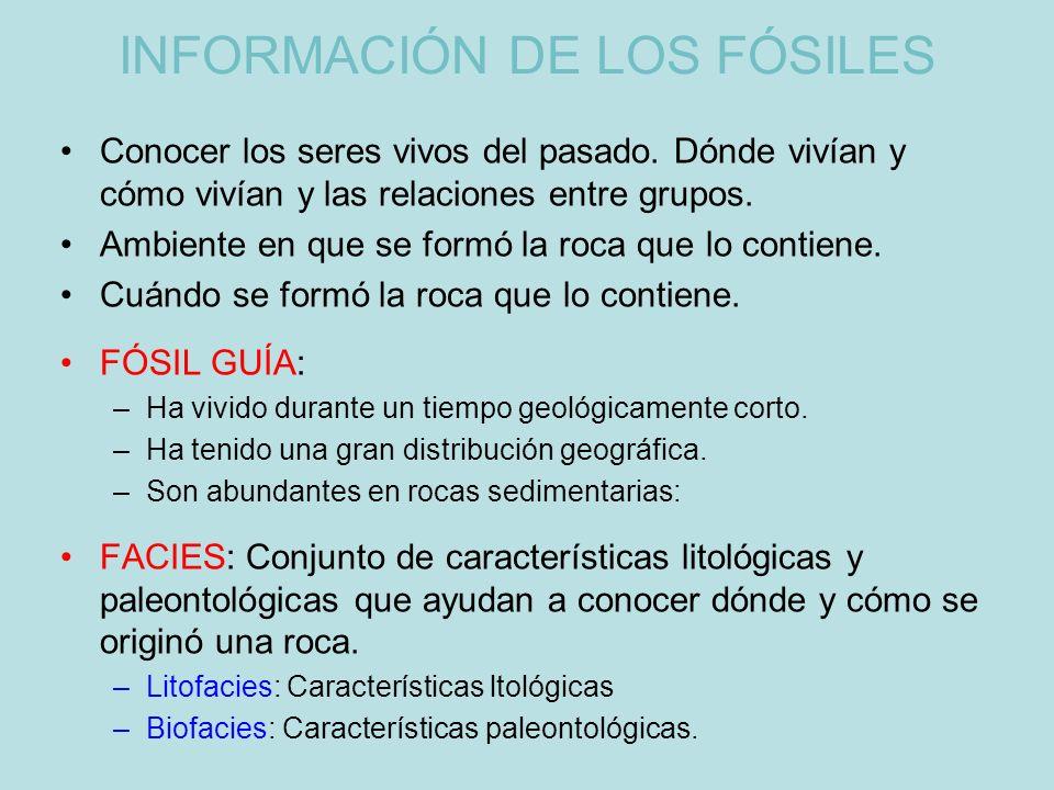 INFORMACIÓN DE LOS FÓSILES