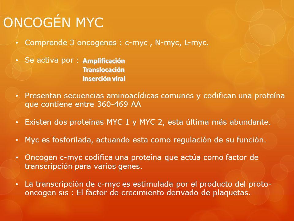 ONCOGÉN MYC Comprende 3 oncogenes : c-myc , N-myc, L-myc.