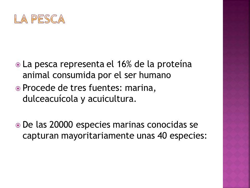 LA PESCA La pesca representa el 16% de la proteína animal consumida por el ser humano.
