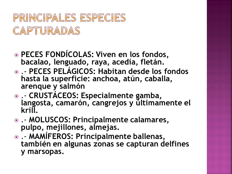Principales especies capturadas