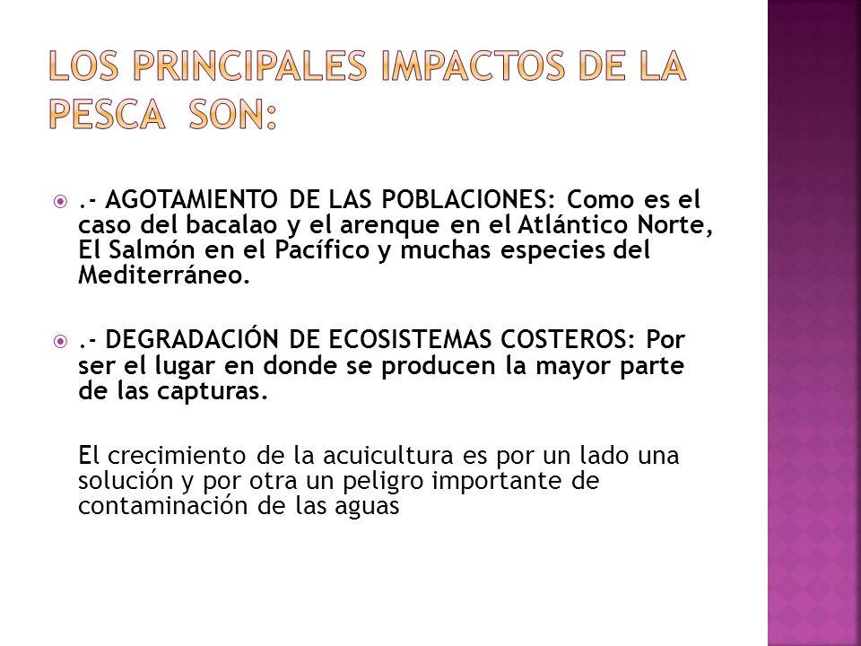 Los principales impactos de la pesca son: