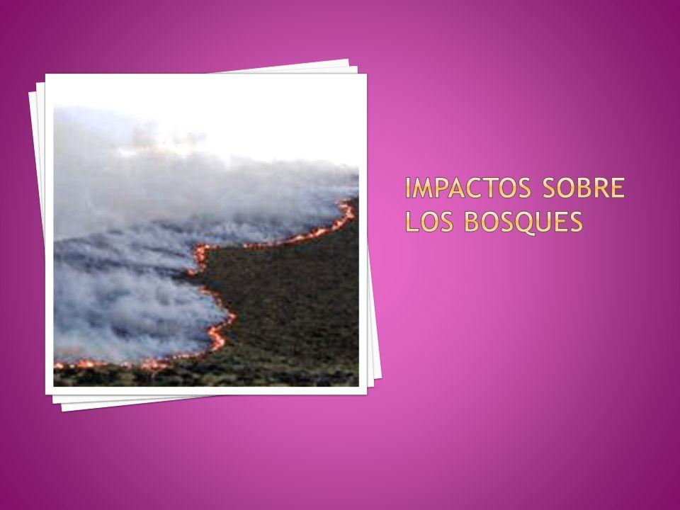 Impactos sobre los bosques