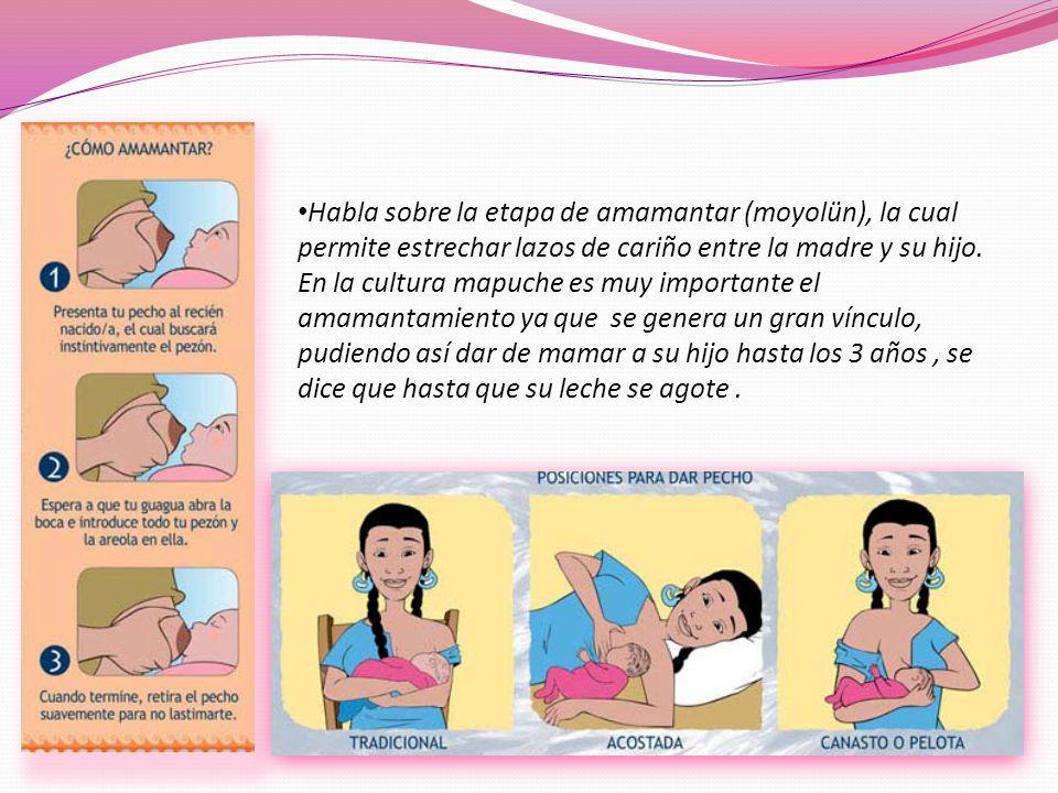 Habla sobre la etapa de amamantar (moyolün), la cual permite estrechar lazos de cariño entre la madre y su hijo.