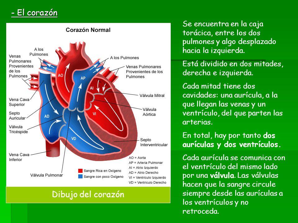 - El corazón Dibujo del corazón