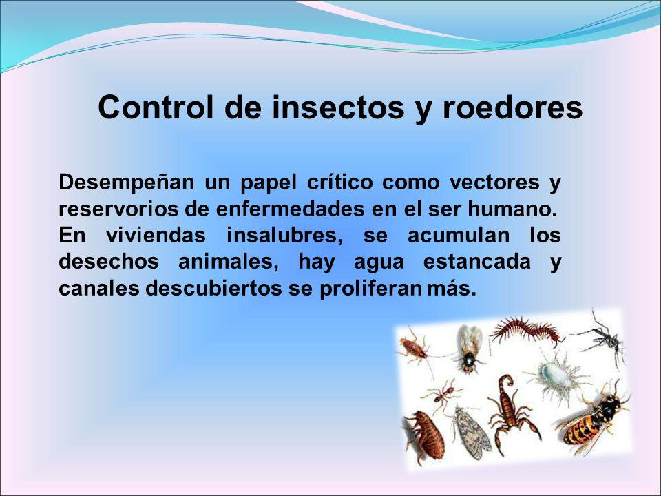 Control de insectos y roedores