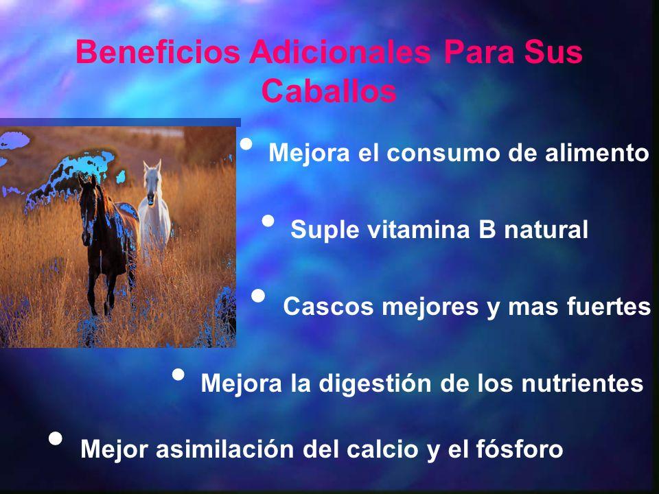 Beneficios Adicionales Para Sus Caballos