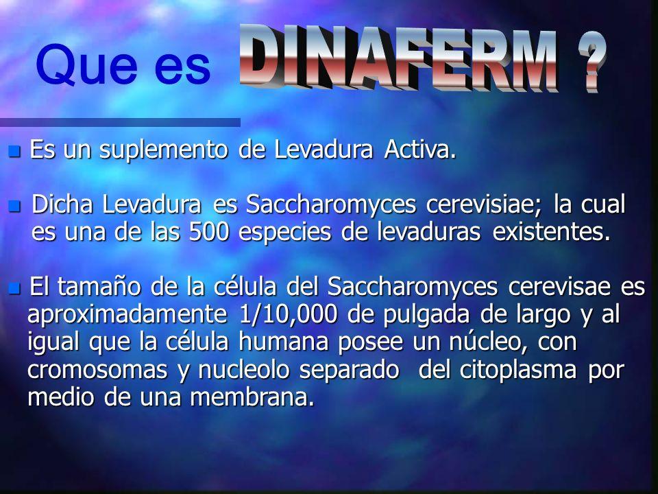 Que es DINAFERM Es un suplemento de Levadura Activa.