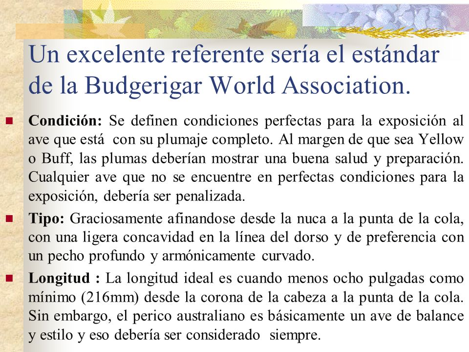 Un excelente referente sería el estándar de la Budgerigar World Association.