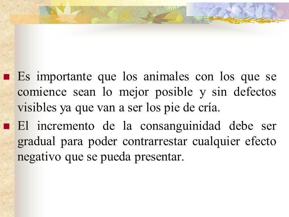 Es importante que los animales con los que se comience sean lo mejor posible y sin defectos visibles ya que van a ser los pie de cría.