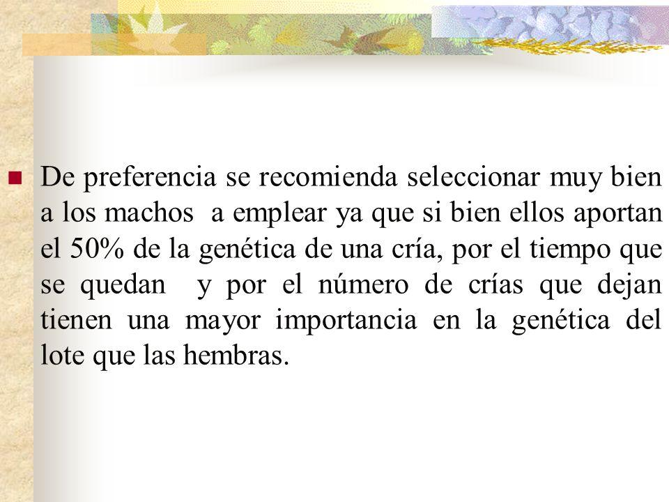 De preferencia se recomienda seleccionar muy bien a los machos a emplear ya que si bien ellos aportan el 50% de la genética de una cría, por el tiempo que se quedan y por el número de crías que dejan tienen una mayor importancia en la genética del lote que las hembras.
