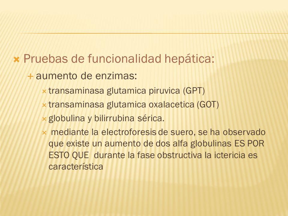 Pruebas de funcionalidad hepática: