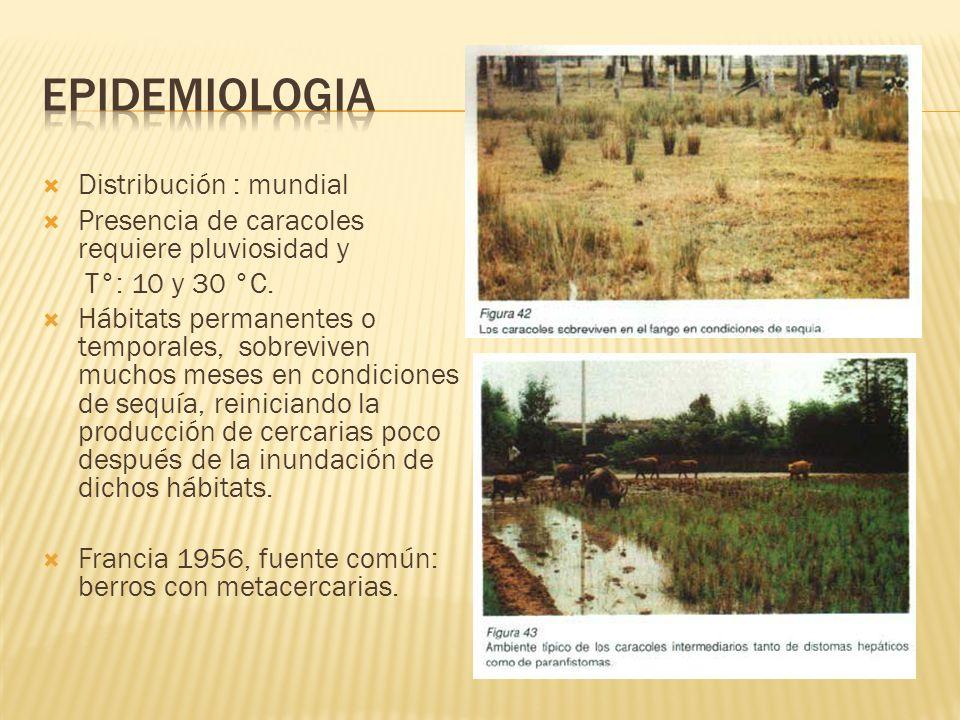Epidemiologia Distribución : mundial