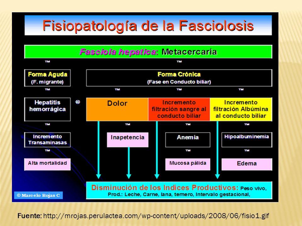 Fuente: http://mrojas. perulactea