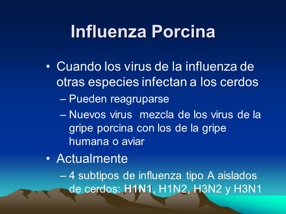 Influenza Porcina Cuando los virus de la influenza de otras especies infectan a los cerdos. Pueden reagruparse.