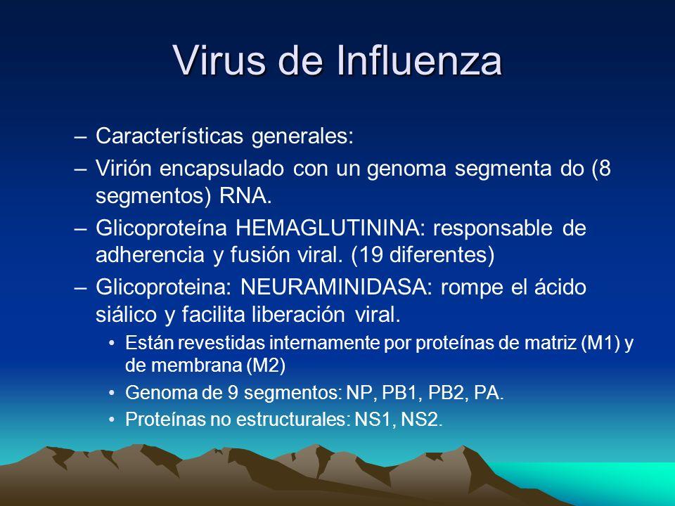 Virus de Influenza Características generales: