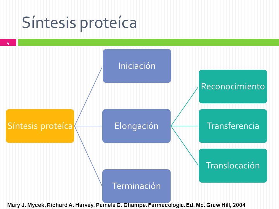 Síntesis proteíca Síntesis proteíca. Iniciación. Elongación. Reconocimiento. Transferencia. Translocación.