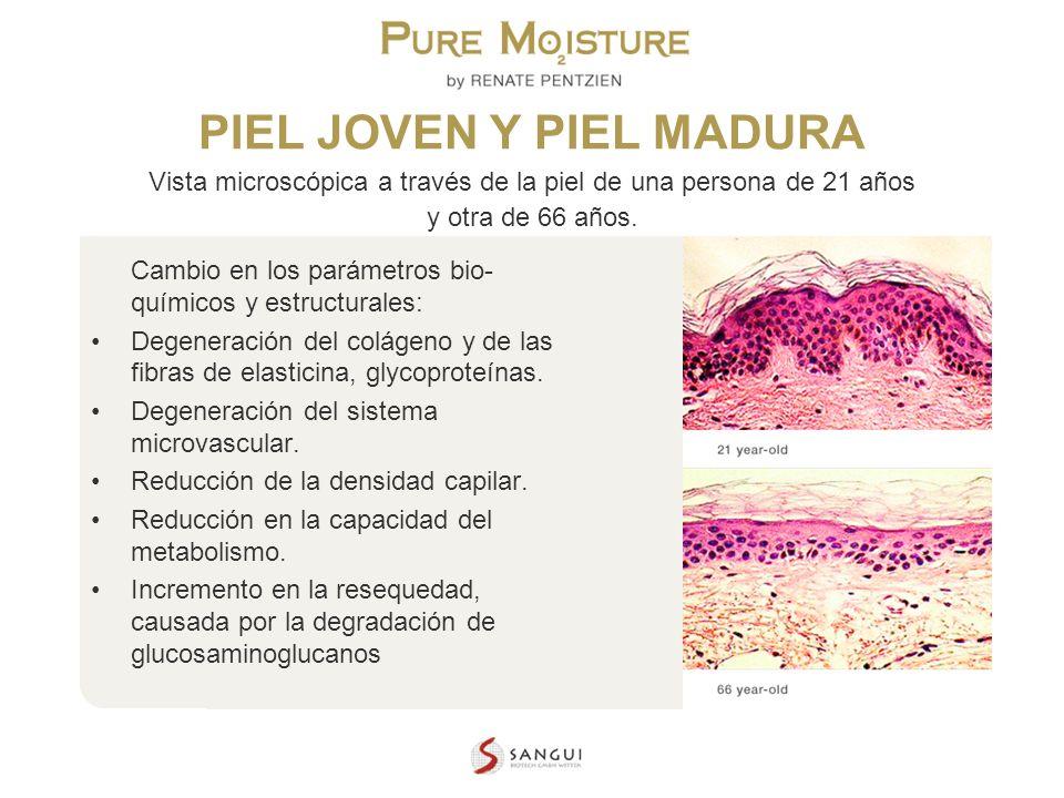PIEL JOVEN Y PIEL MADURA Vista microscópica a través de la piel de una persona de 21 años y otra de 66 años.
