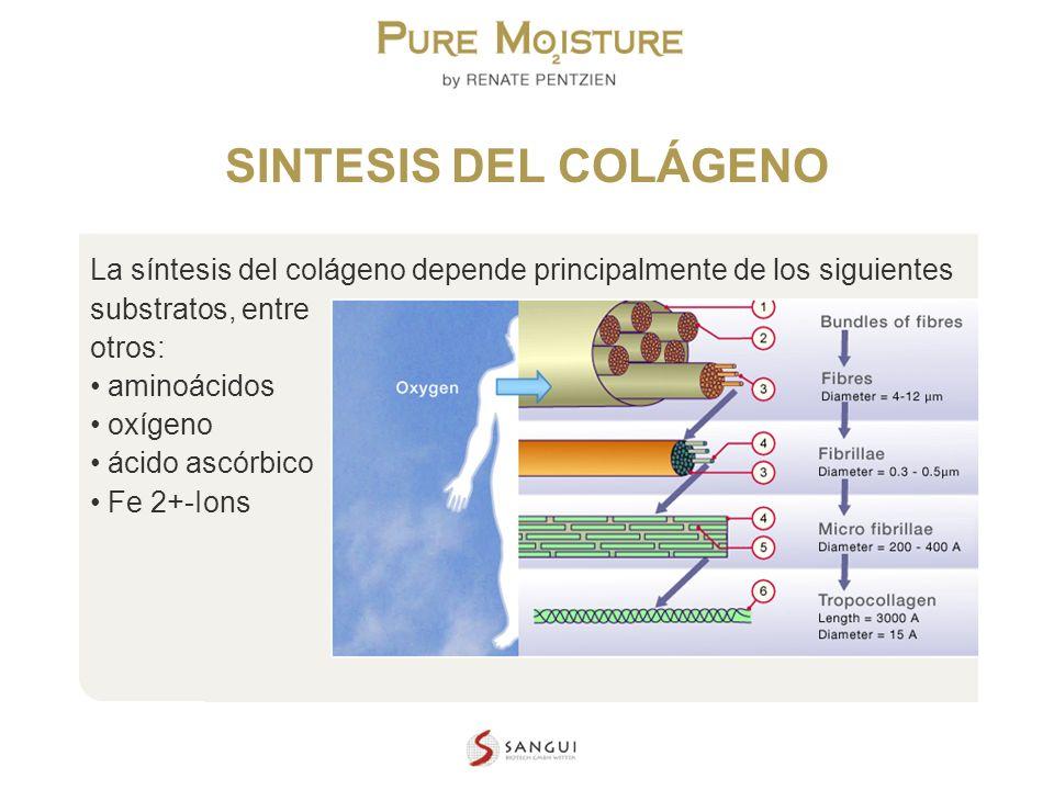 SINTESIS DEL COLÁGENO La síntesis del colágeno depende principalmente de los siguientes substratos, entre.