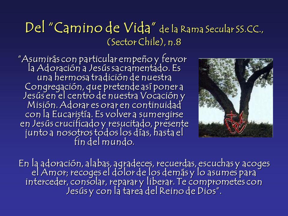 Del Camino de Vida de la Rama Secular SS.CC., (Sector Chile), n.8