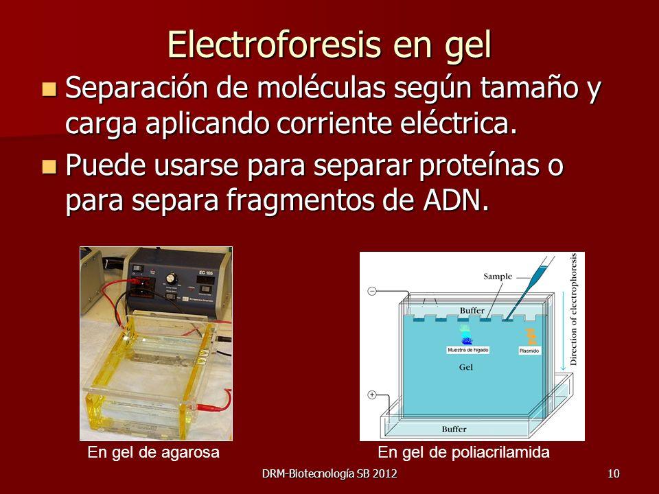 Electroforesis en gel Separación de moléculas según tamaño y carga aplicando corriente eléctrica.