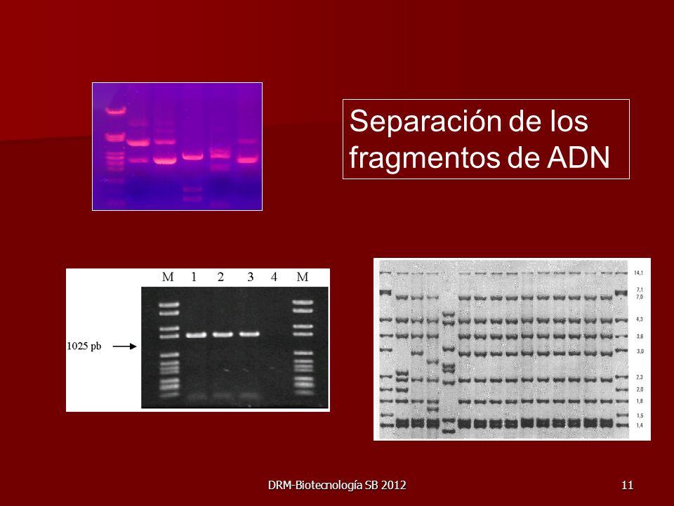Separación de los fragmentos de ADN