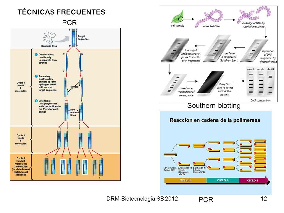 TÉCNICAS FRECUENTES PCR Southern blotting PCR