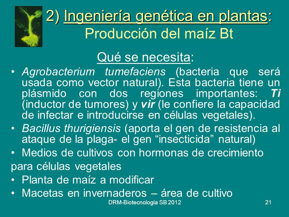 2) Ingeniería genética en plantas: Producción del maíz Bt