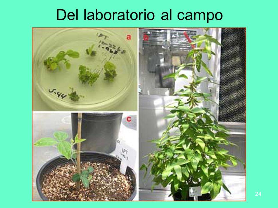 Del laboratorio al campo