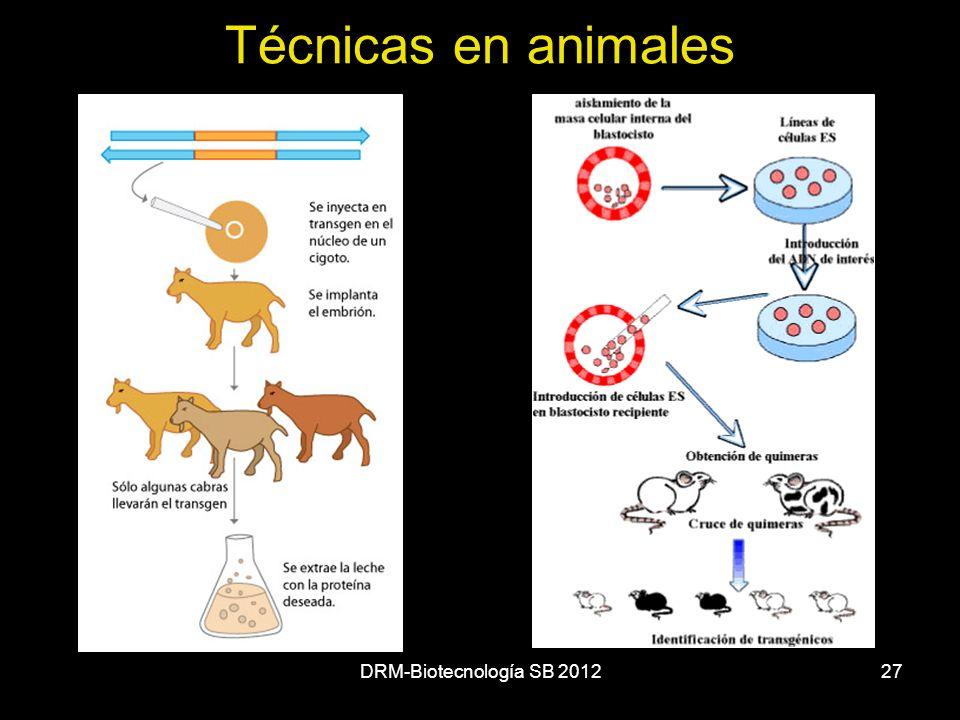 Técnicas en animales DRM-Biotecnología SB 2012