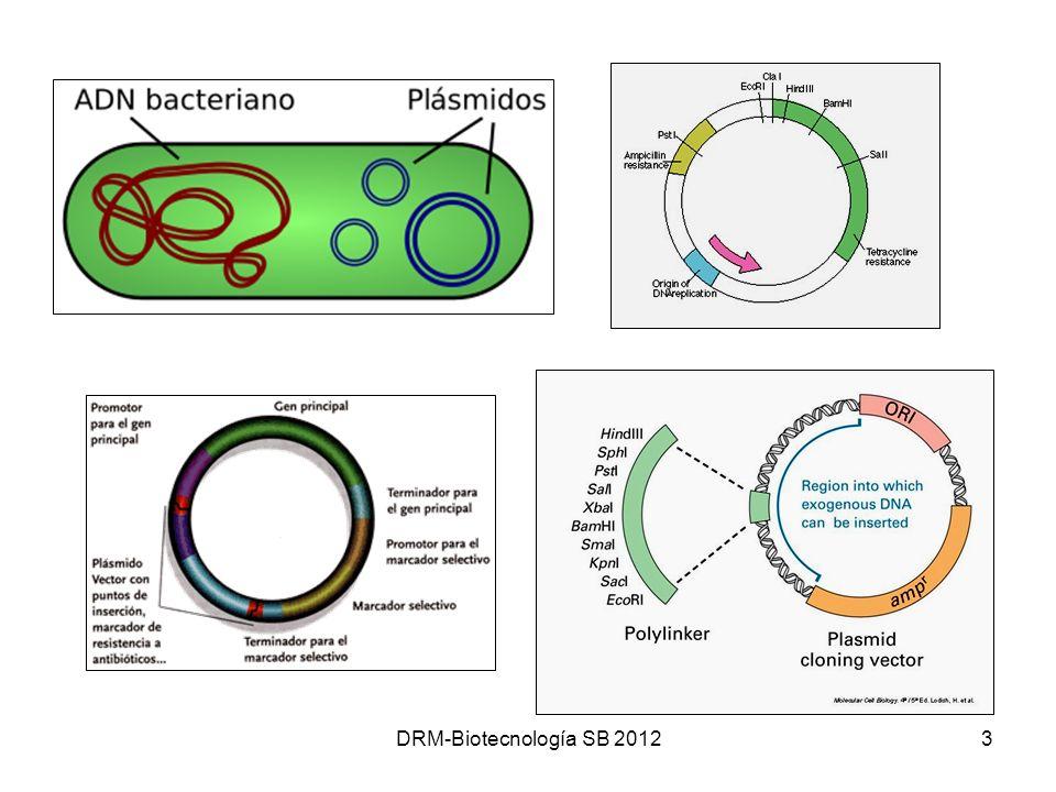 DRM-Biotecnología SB 2012