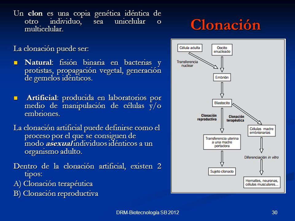 Un clon es una copia genética idéntica de otro individuo, sea unicelular o multicelular.