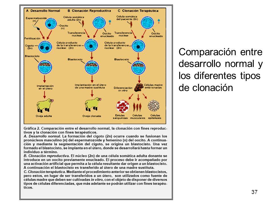 Comparación entre desarrollo normal y los diferentes tipos de clonación