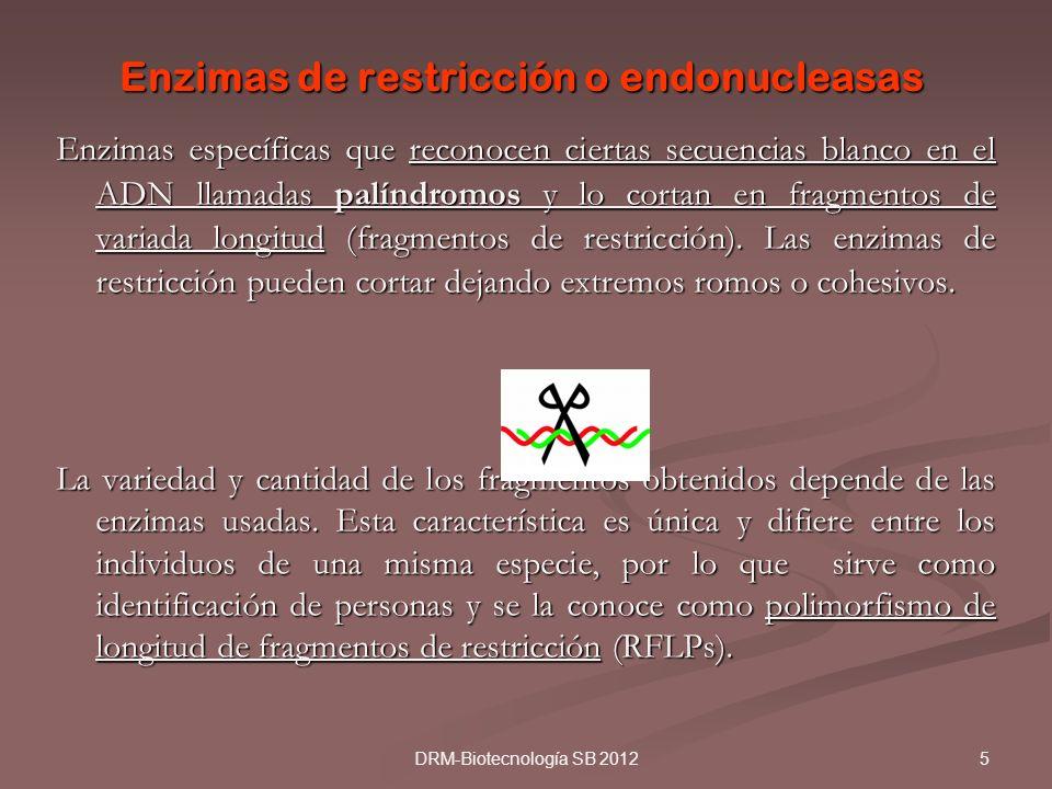 Enzimas de restricción o endonucleasas