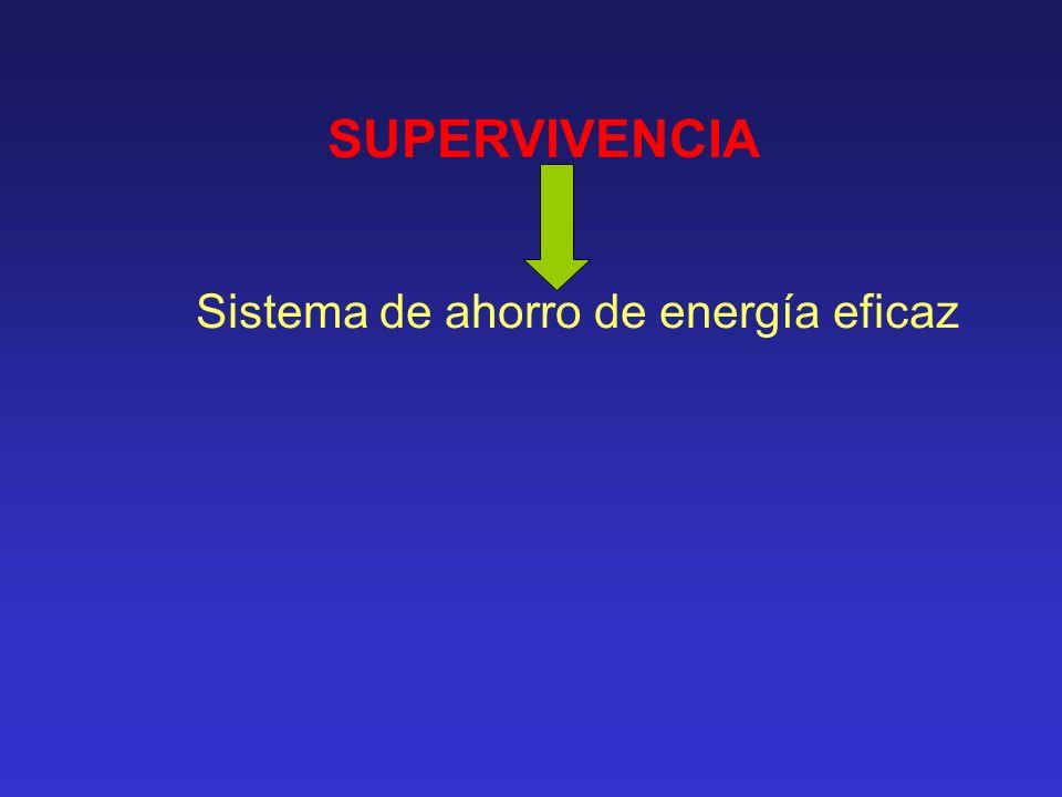SUPERVIVENCIA Sistema de ahorro de energía eficaz