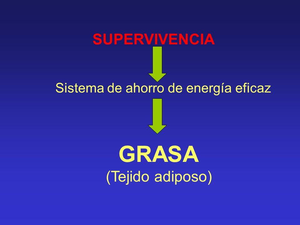 GRASA (Tejido adiposo) SUPERVIVENCIA